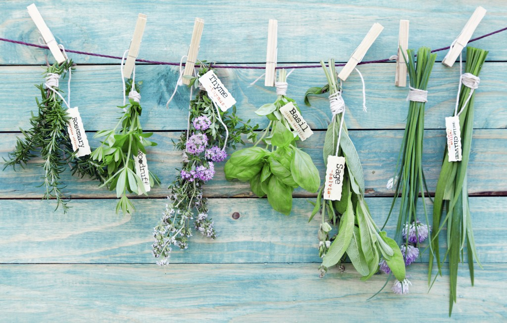 Assorted hanging Herbs on an old and vintage wooden blue background, for seasoning concept.